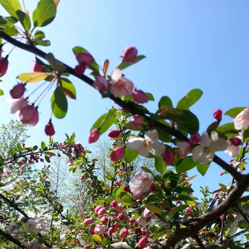 Spring flowers via mindfulmomma.com