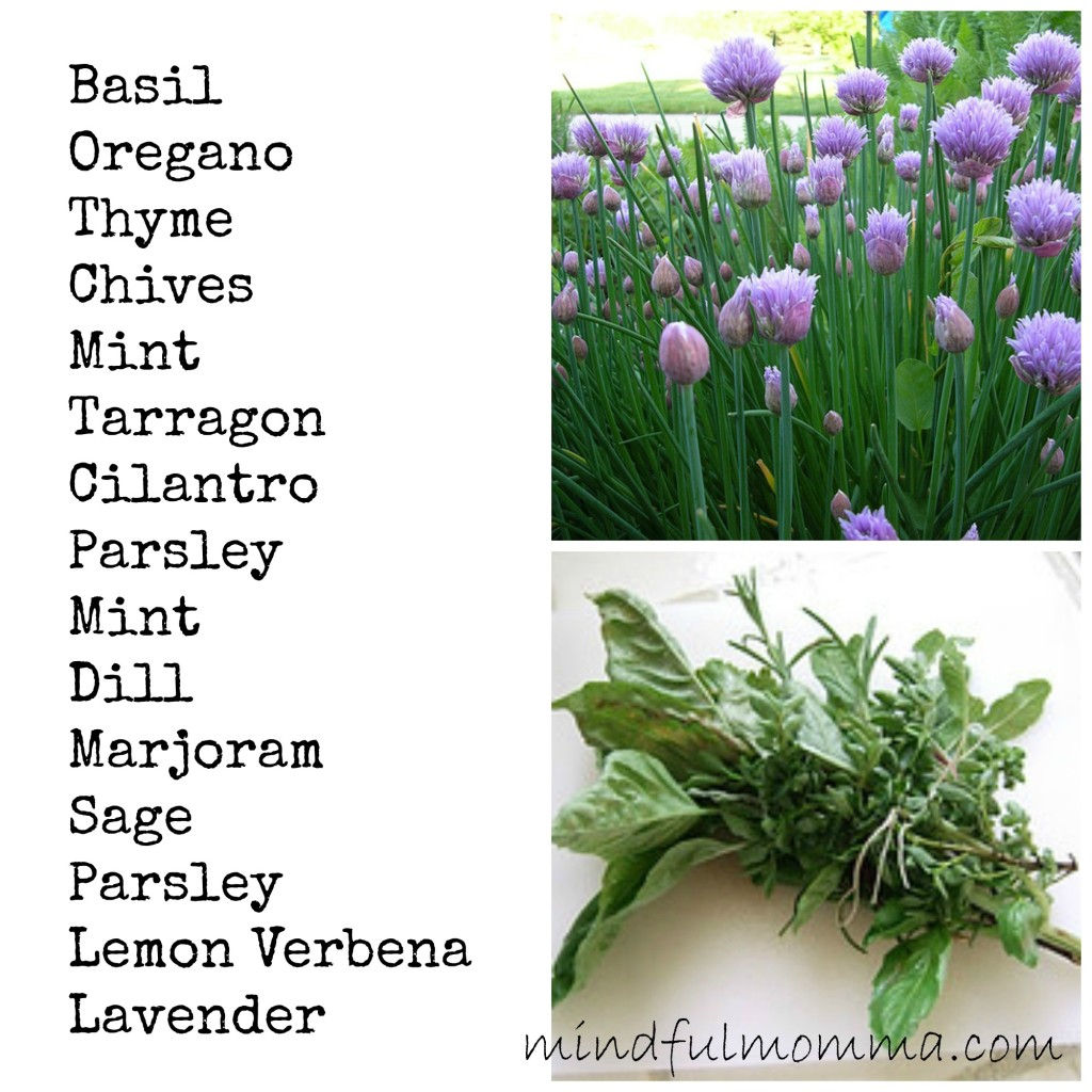 How to Make a Herb Container Garden www.mindfulmomma.com