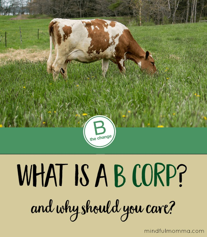How to Be a Force For Good By Buying From a B Corp